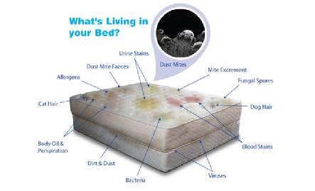 Whats In Your Mattress?